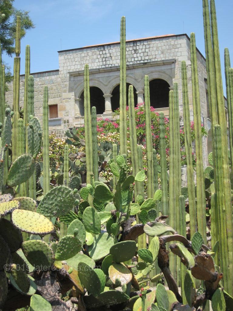 Oaxaca's Ethnobotanical Garden